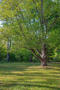 Tree in the Yard