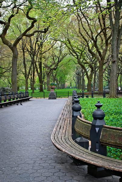 """Benches Central Park""<br /> <br /> A Spring view of the Sycamore trees and park bench in Central Park in New York City."