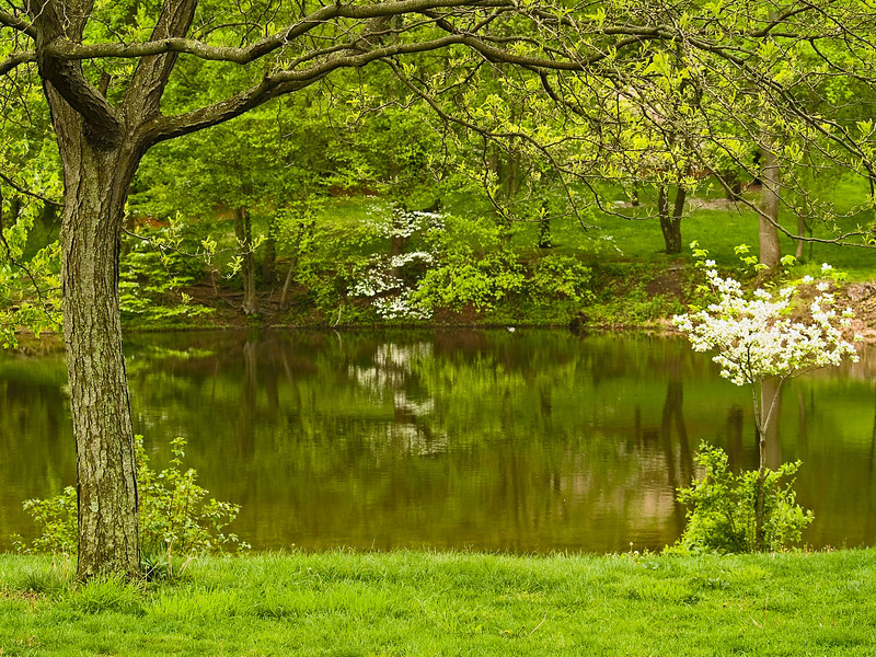 """Beautiful Spring""<br /> A Spring view inside Holmdel Park in New Jersey."