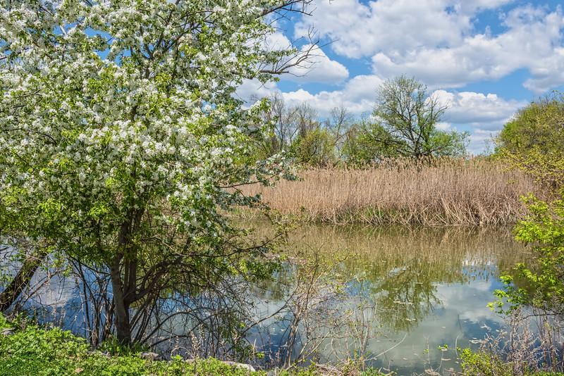 Spring Wetland
