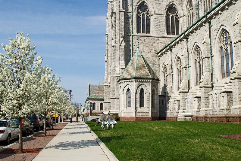 Blooming dogwood trees outside of Sacred Heart Cathedral in Newark.