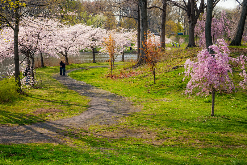 Cherry Blossoms Trail