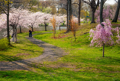 Cherry Blossoms Trail