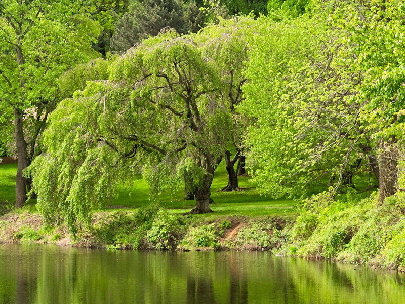 """Spring Reflections""<br /> New Spring green leaves reflect off the pond in Holmdel Park in New Jersey."