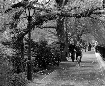 Spring in Black & White