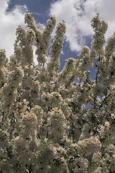 Blossoms in Colorado Springs