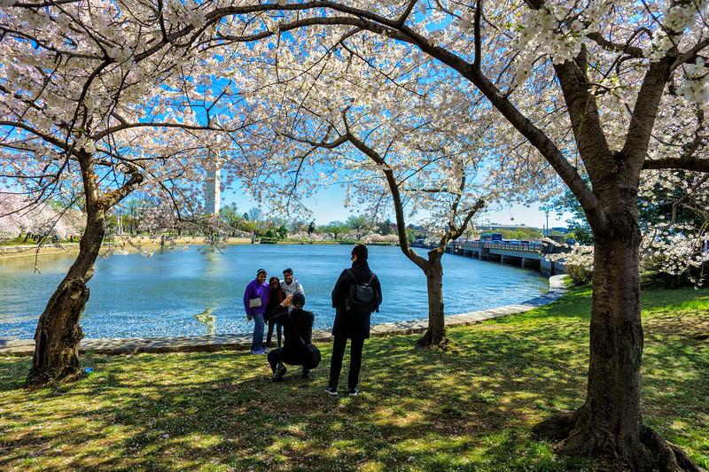 Posing amidst the Yoshino cherry trees
