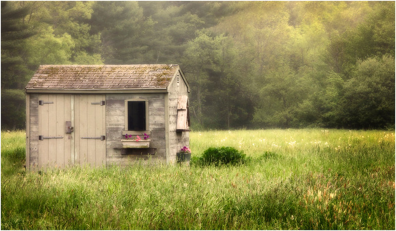 Garden Shed  in Fog