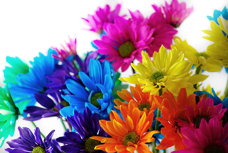 Bouquet & Blossoms 017-B-White