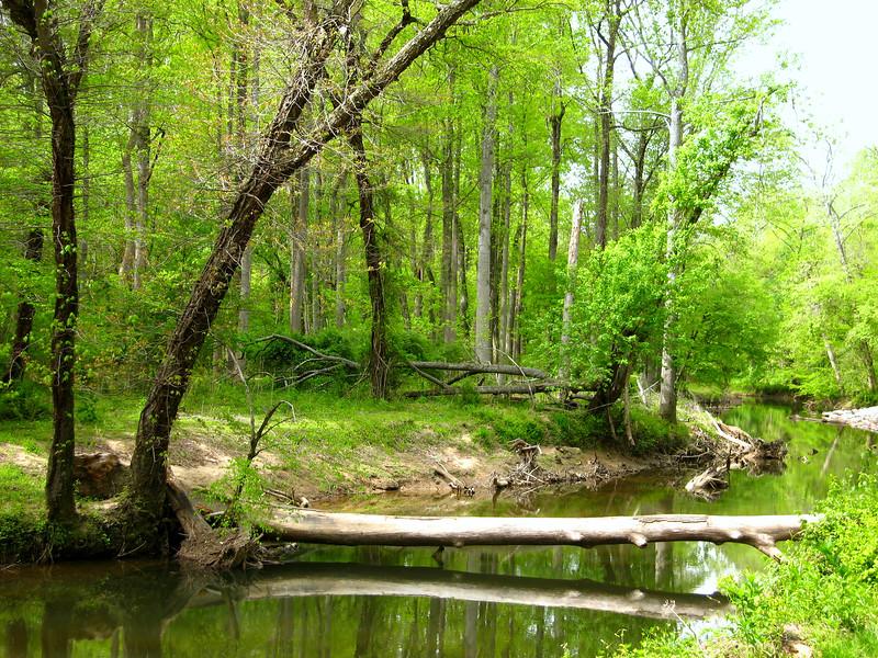 Spring - Difficult Run Creek, Virginia