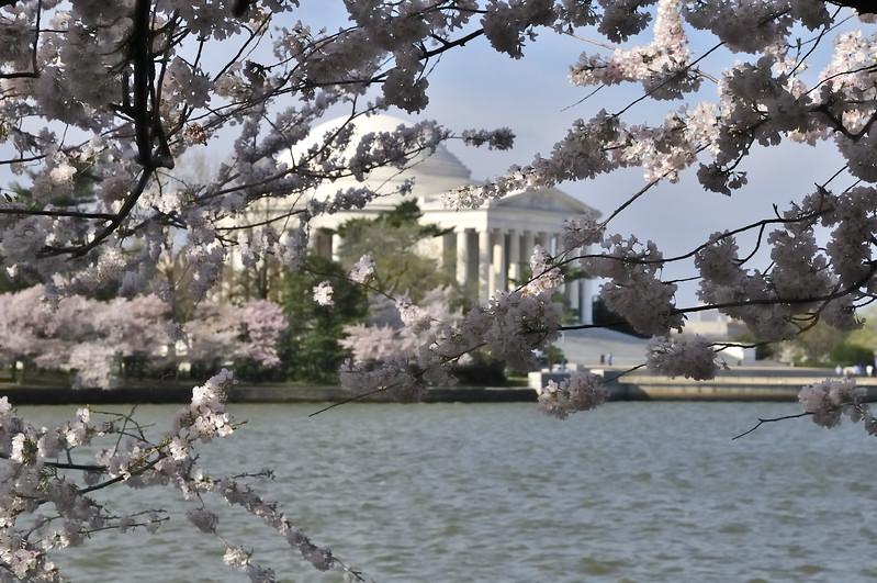 Tidal Basin and the Jefferson Memorial