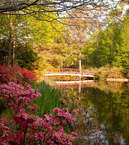Springtime at Callaway