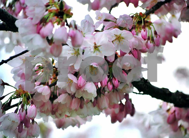 Bouquet & Blossoms 010-C