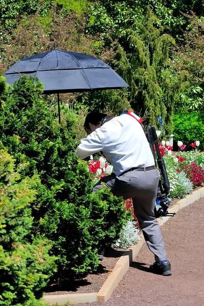 Working photographer - Sarah P. Duke Gardens - Durham, NC