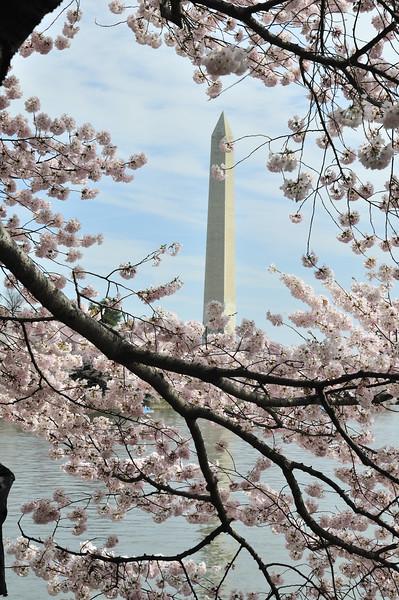 The Washington Monument - Washington, DC