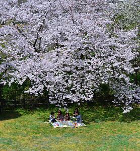 A Spring Break