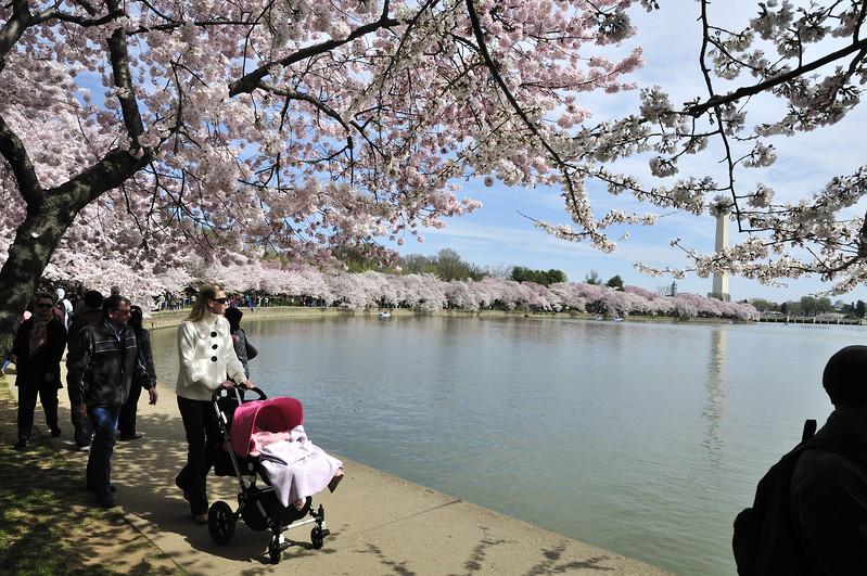 Cherry blossom hordes