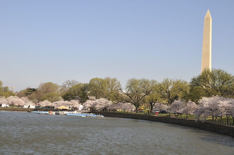 Paddleboat rentals - Tidal Basin