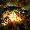 The Fire-Flower — Magic of The Midsummer Night / Огнь-Цветок — волшебство Купальской ночи