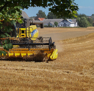 Combine harvesters on the job in Denmark. Photo: Martin Bager.