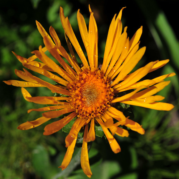 Icky name... Sneezeweed<br /> Cool name... Owl Claws