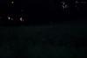 still more fireflies