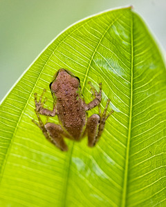 Tree frog in water purification plant.
