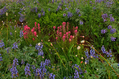 Wildflowers at Mt Rainier NP 001