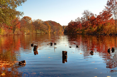 More fall foliage shines on the Charles.