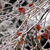 Winter Coat<br /> Jan 2011