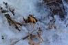 Ice Art 11