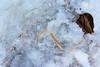 Ice Art 10