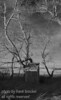 I assume this was the out-house at the old abandoned farm.  I thought it makes for a not so shitty photo :-)