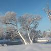 Icy Beauty / Морозная красота
