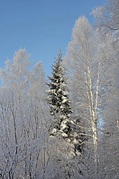 Winter Beauty / Зимняя вязь
