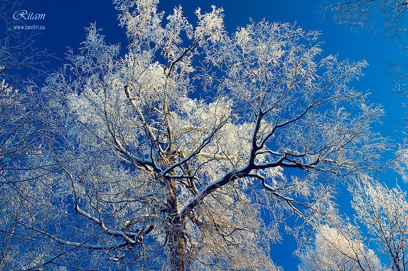 Winter Lace / Зимние кружева
