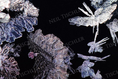 1358  Frost crystals on car