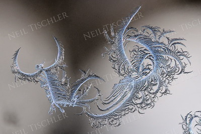 """#1141  The patterns of winter frost on our windows differ each time they occur.  This one we've named """"The Dragon."""""""