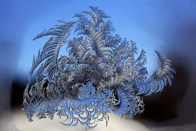 #1672  Window Frost  on a 12°F morning (image enhanced to show detail)