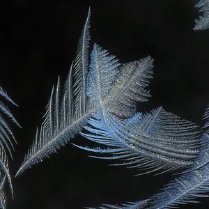 #1534  Window Frost