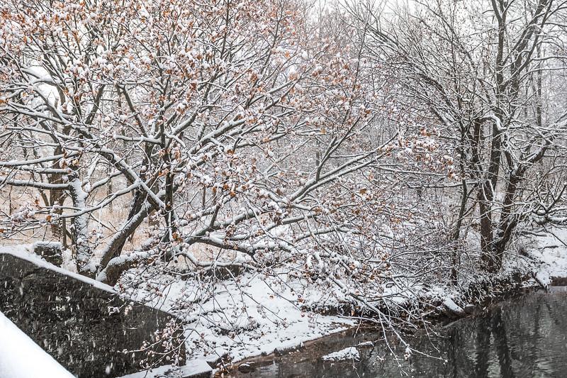 Snowing In Woods