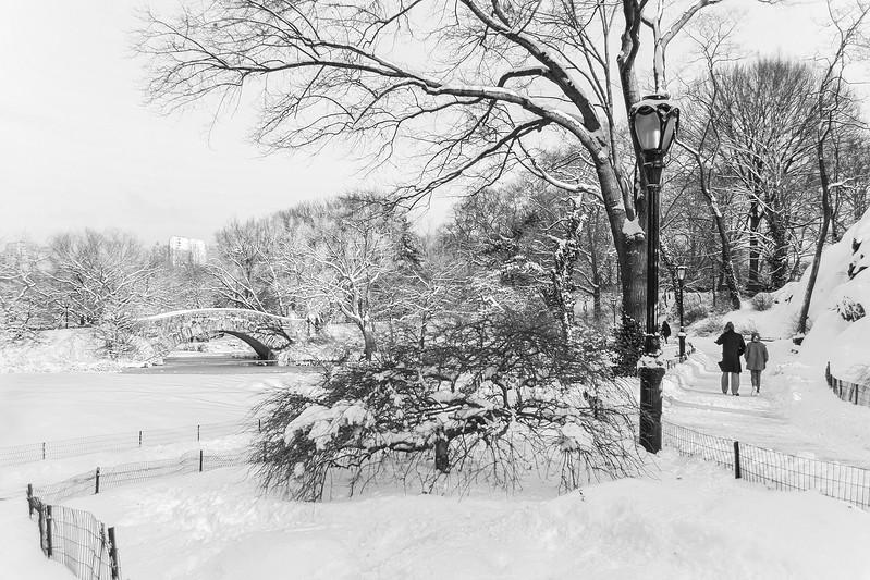 Winter Walk in the Park