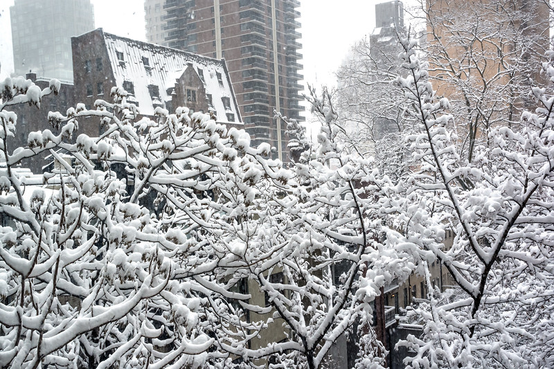 Snowy Branches in the City
