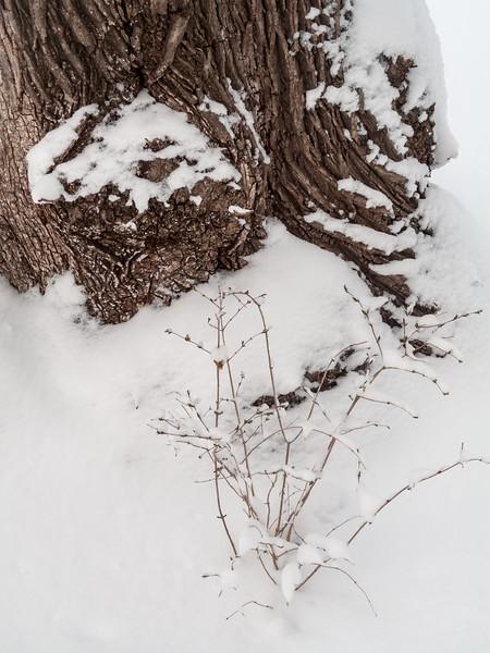 Simple Winter Beauty