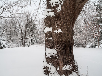 Winter Tree Trunk Landscape