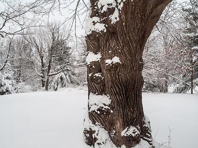 Winter Tree Trunk Landscape