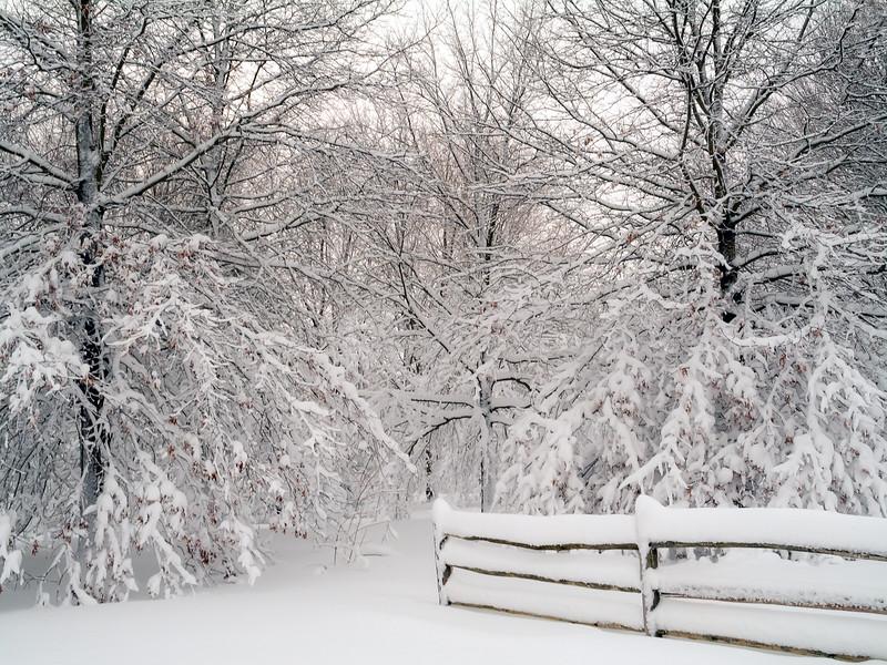 Snow White Woods