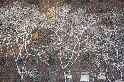 White Winter Trees