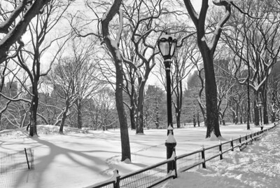 """Central Park Snowfall B&W"" A  classic black and white view of Central Park after a freshly fallen snow."