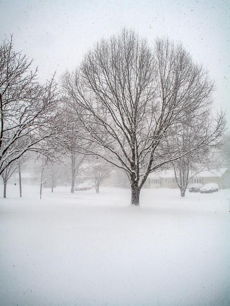 Neighborhood Snow Storm